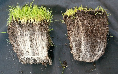 SLIKA2-Mycorrhiza-Comparison-768x480.jpg